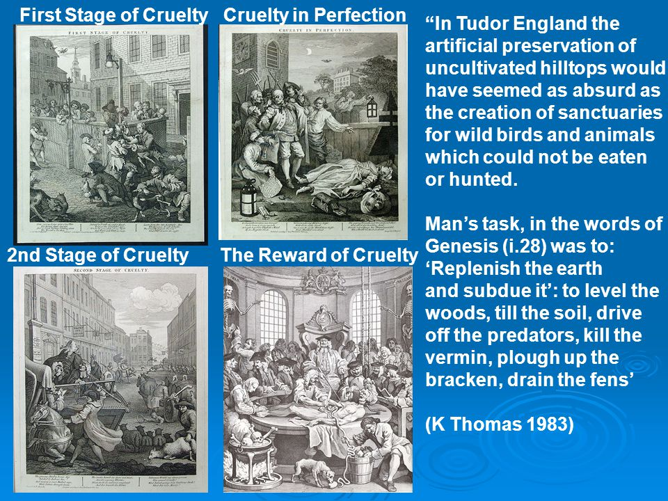 """First Stage of Cruelty 2nd Stage of CrueltyThe Reward of Cruelty Cruelty in Perfection """"In Tudor England the artificial preservation of uncultivated h"""