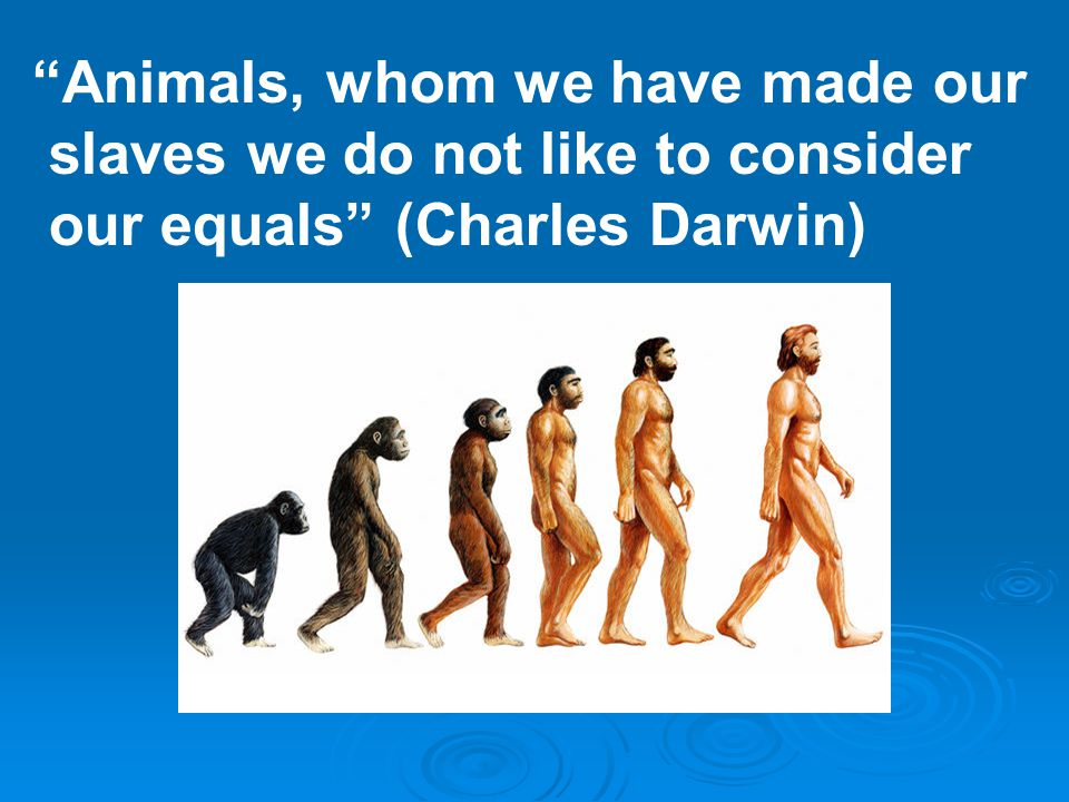 Animals, whom we have made our slaves we do not like to consider our equals (Charles Darwin)
