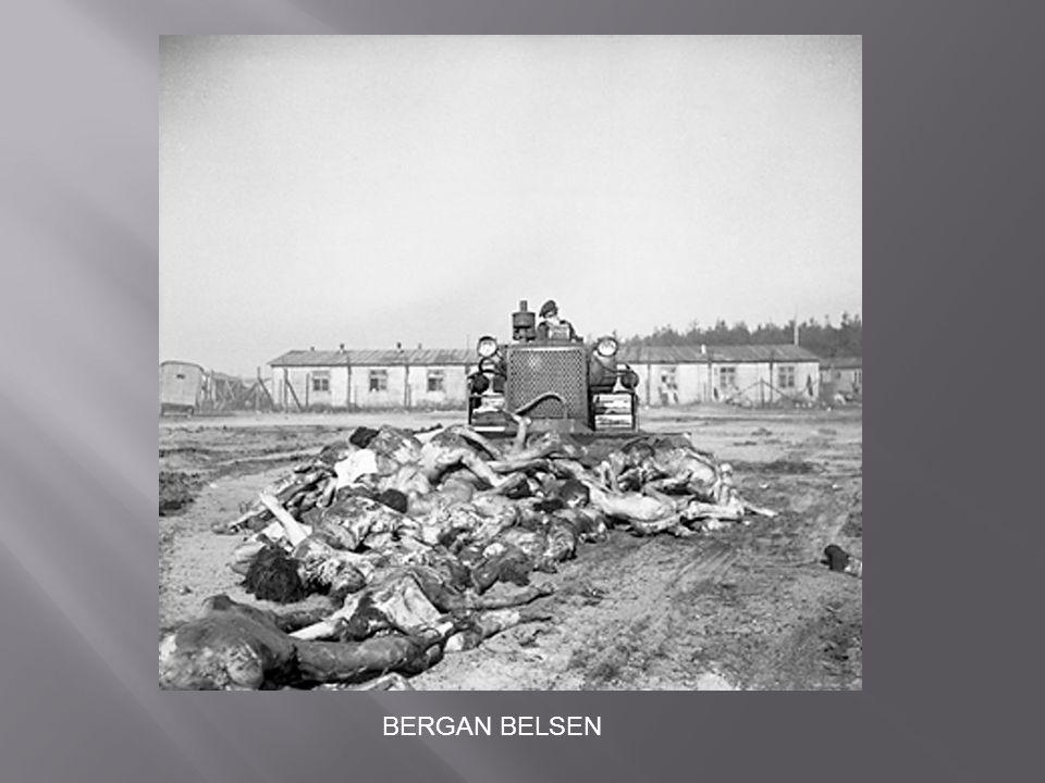 BERGAN BELSEN