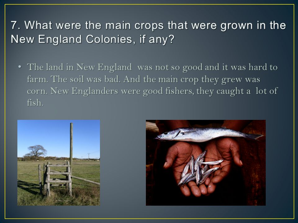 The land in New England was not so good and it was hard to farm. The soil was bad. And the main crop they grew was corn. New Englanders were good fish