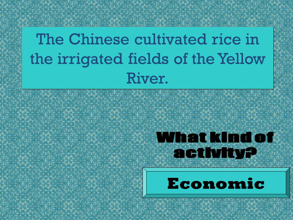 The Chinese cultivated rice in the irrigated fields of the Yellow River. Economic