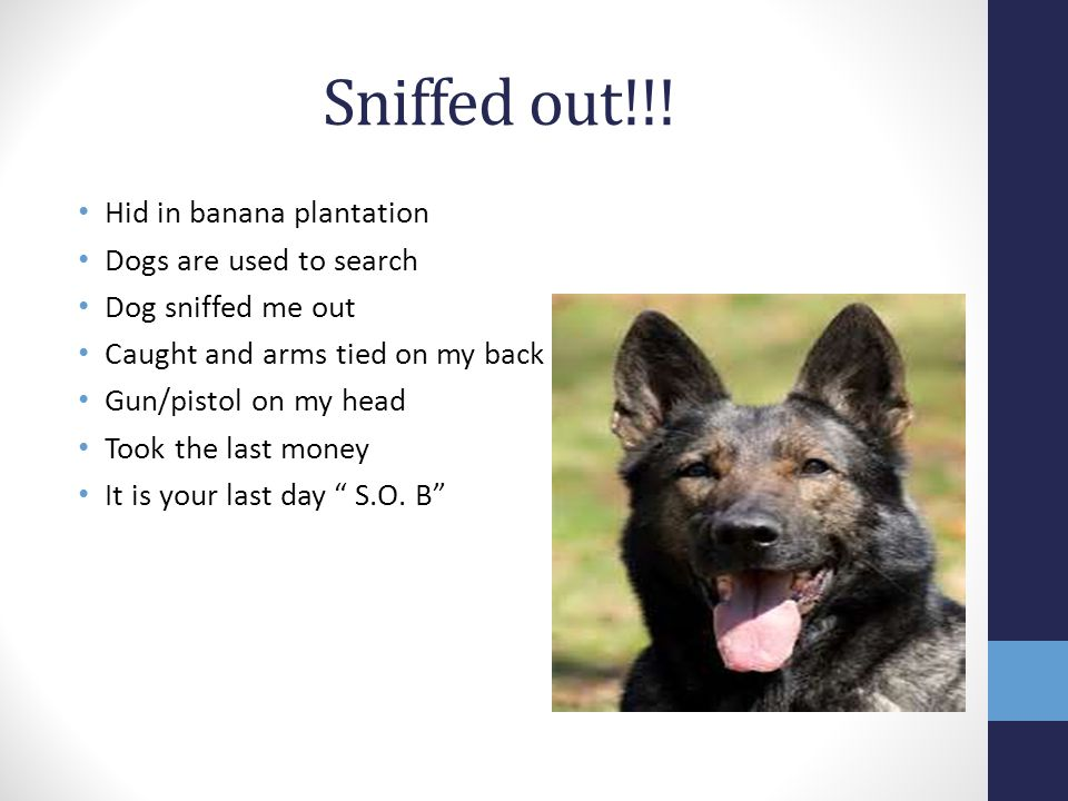 Sniffed out!!! Hid in banana plantation Dogs are used to search Dog sniffed me out Caught and arms tied on my back Gun/pistol on my head Took the last
