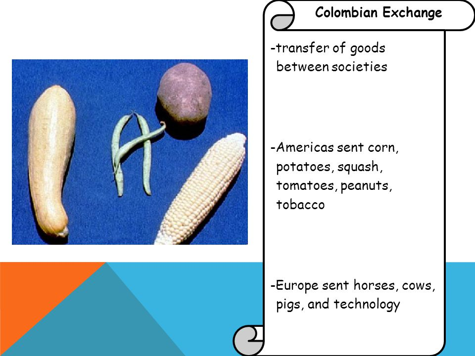 Colombian Exchange -transfer of goods between societies -Americas sent corn, potatoes, squash, tomatoes, peanuts, tobacco -Europe sent horses, cows, pigs, and technology