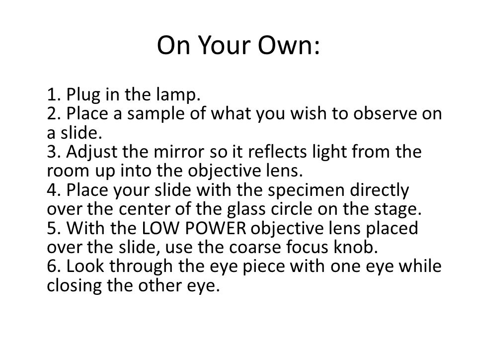 On Your Own: 1. Plug in the lamp. 2. Place a sample of what you wish to observe on a slide.