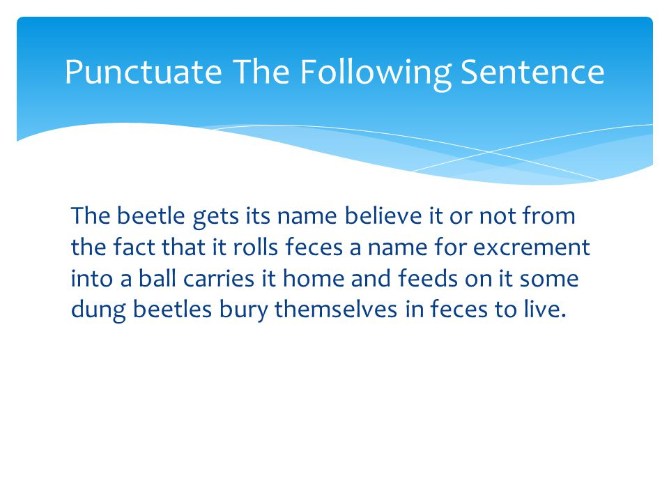 The beetle gets its name believe it or not from the fact that it rolls feces a name for excrement into a ball carries it home and feeds on it some dun