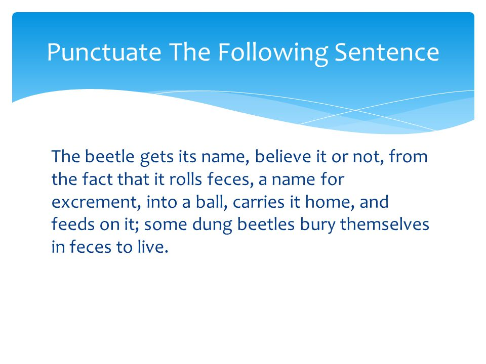 The beetle gets its name, believe it or not, from the fact that it rolls feces, a name for excrement, into a ball, carries it home, and feeds on it; s