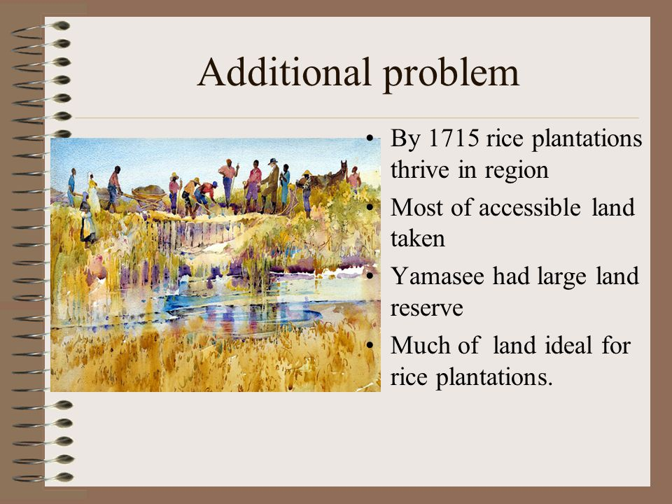 Additional problem By 1715 rice plantations thrive in region Most of accessible land taken Yamasee had large land reserve Much of land ideal for rice plantations.