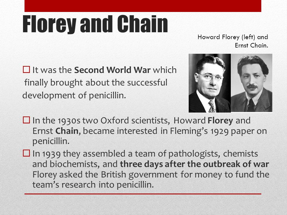 Florey and Chain  It was the Second World War which finally brought about the successful development of penicillin.