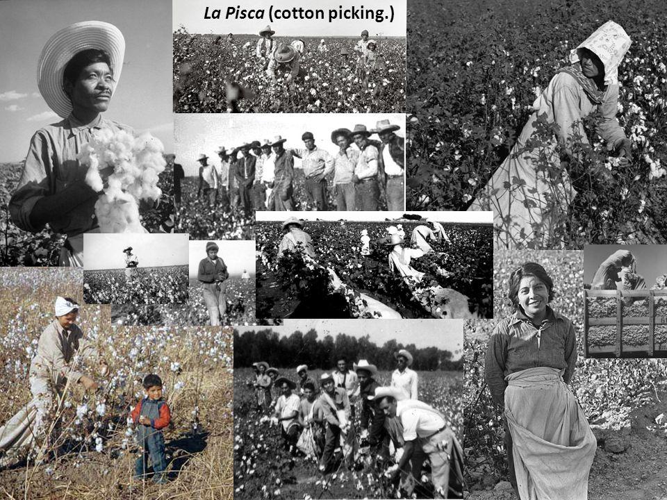 La Pisca (cotton picking.)