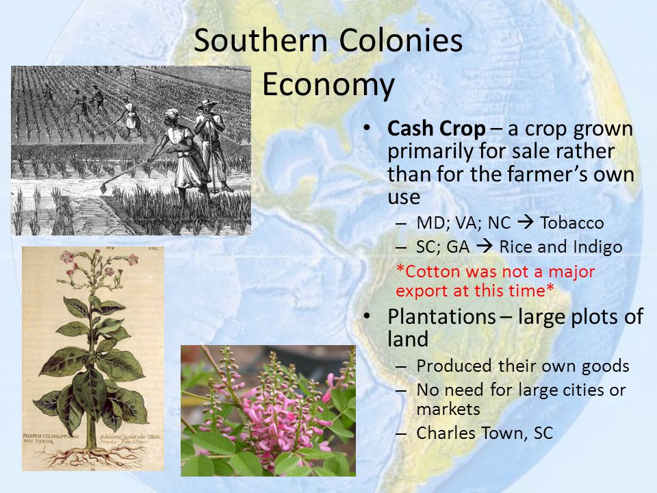 Southern Colonies Economy Cash Crop – a crop grown primarily for sale rather than for the farmer's own use – MD; VA; NC  Tobacco – SC; GA  Rice and