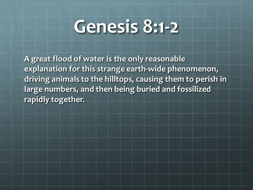 Genesis 8:1-2 A great flood of water is the only reasonable explanation for this strange earth-wide phenomenon, driving animals to the hilltops, causing them to perish in large numbers, and then being buried and fossilized rapidly together.