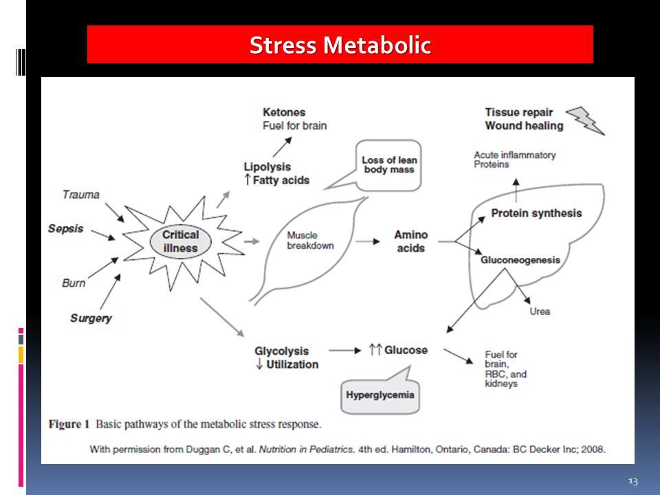 13 Stress Metabolic
