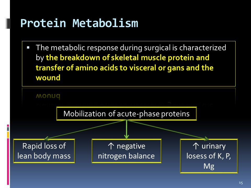 Protein Metabolism 15 Mobilization of acute-phase proteins Rapid loss of lean body mass ↑ negative nitrogen balance ↑ urinary losess of K, P, Mg