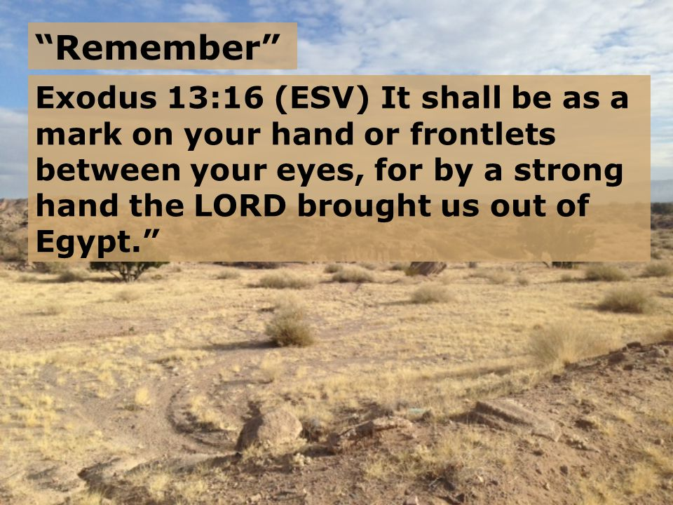 Exodus 14:31 (ESV) Israel saw the great power that the LORD used against the Egyptians, so the people feared the LORD, and they believed in the LORD and in his servant Moses.