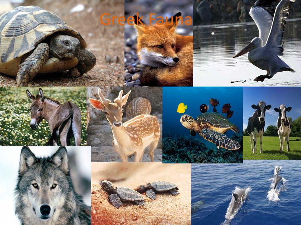 Greek Fauna
