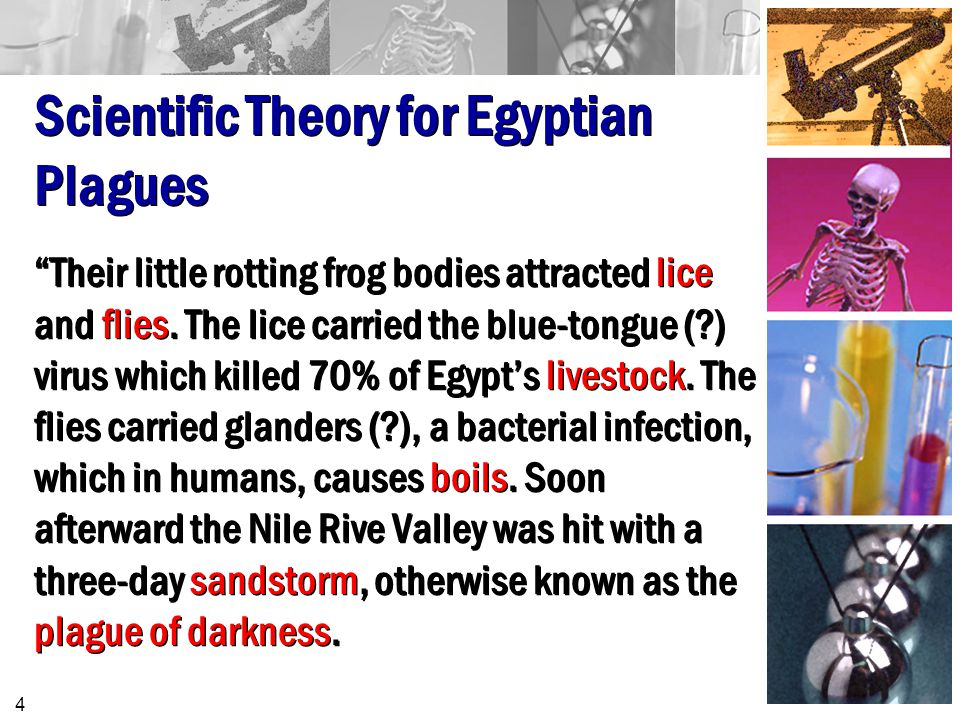Scientific Theory for Egyptian Plagues Their little rotting frog bodies attracted lice and flies.