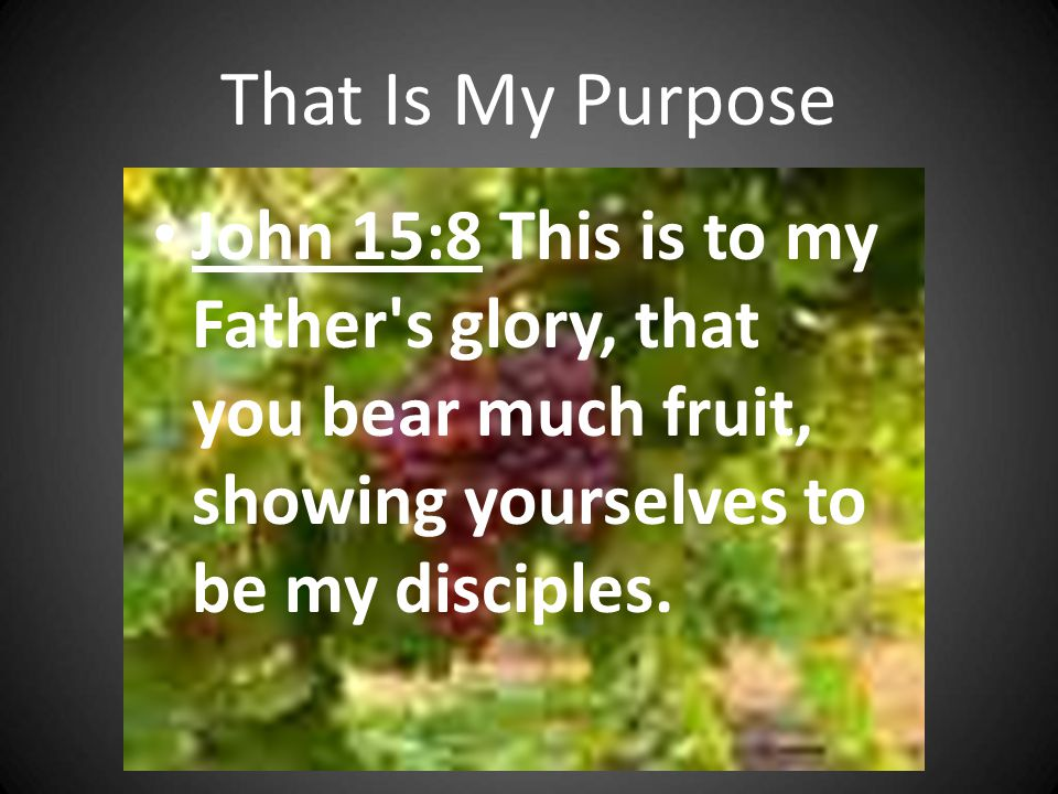 That Is My Purpose John 15:8 This is to my Father's glory, that you bear much fruit, showing yourselves to be my disciples.