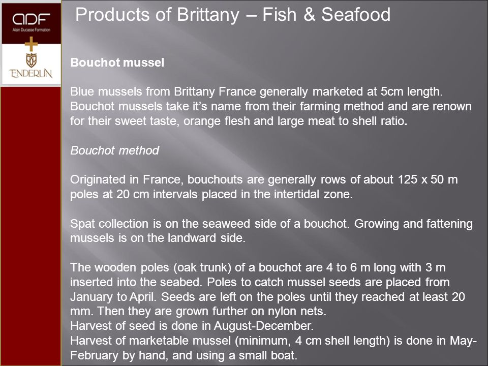 Products of Brittany – Fish & Seafood Bouchot mussel Blue mussels from Brittany France generally marketed at 5cm length. Bouchot mussels take it's nam