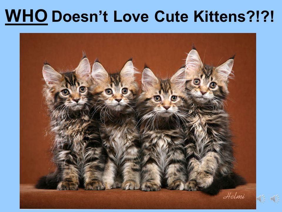 Who Doesn't Love Cute Kittens?