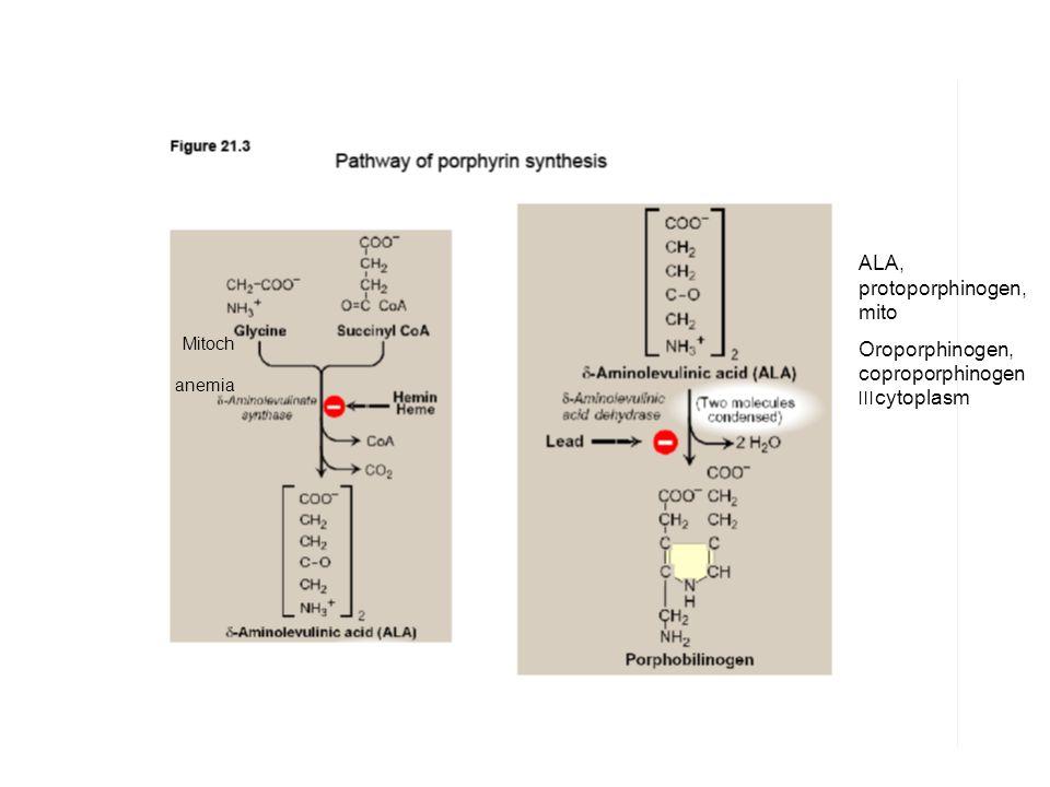 ALA, protoporphinogen, mito Oroporphinogen, coproporphinogen cytoplasm׀׀׀ Mitoch anemia
