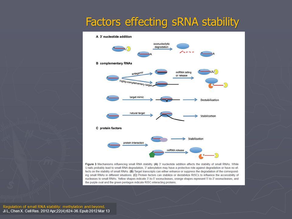 Regulation of small RNA stability: methylation and beyond. Ji L, Chen X. Cell Res. 2012 Apr;22(4):624-36. Epub 2012 Mar 13. Factors effecting sRNA sta