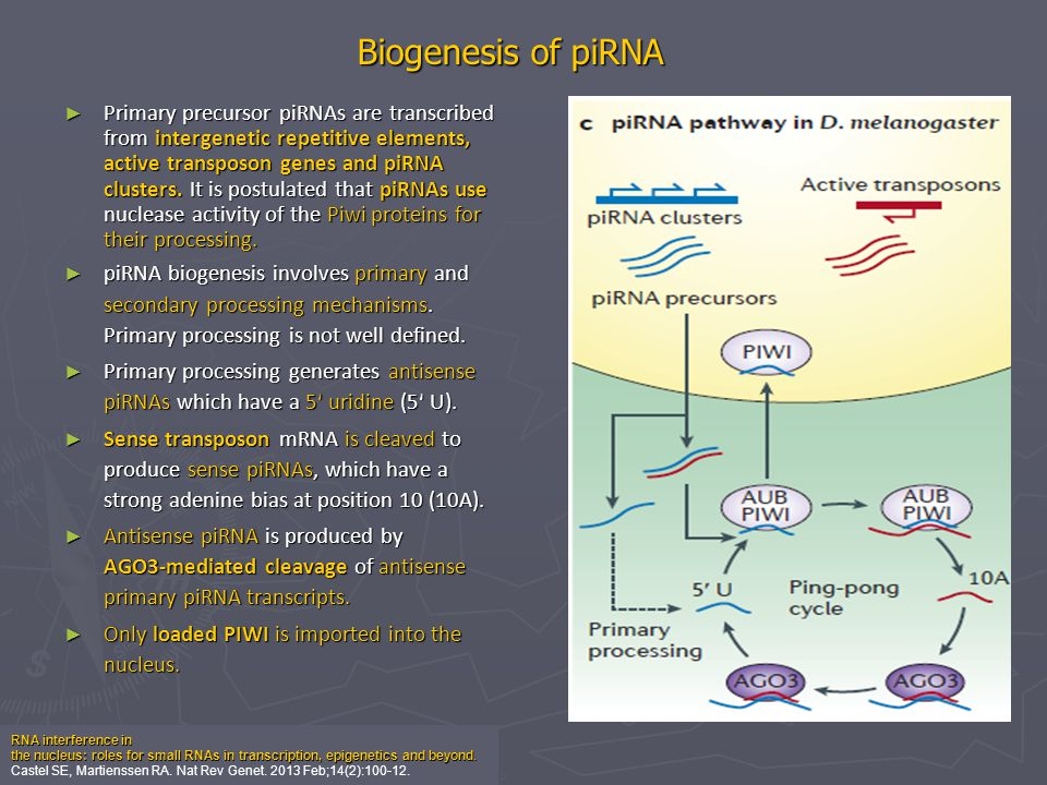 3′ uridylation generally marks small RNAs for degradation and reveal other 3′ tailing events that influence small RNA stability.