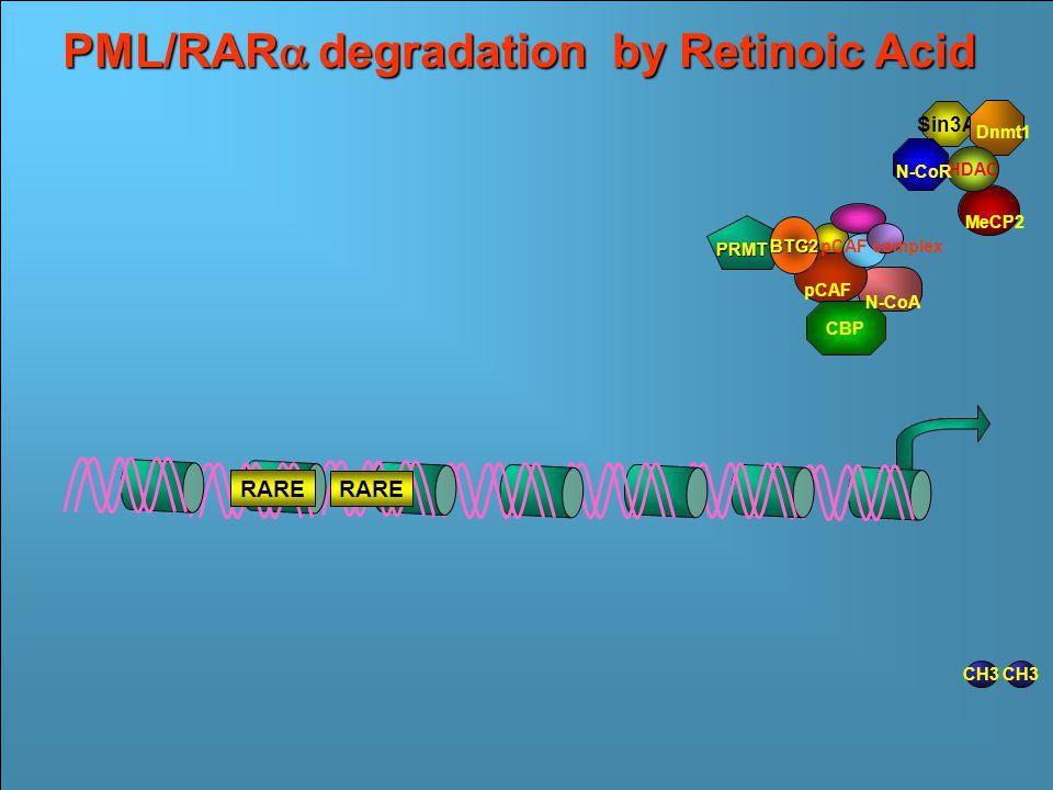 RARE RAR  RARE RAR  PML RARE Ac Transcriptional Repression by PML/RAR  RA 10 -6 M Francesco Grignani CH3 Dnmt1 Sin3A MeCP2 N- CoR HDAC Ac HMT CH3 Transcriptional Activation by Retinoic Acid MeCP2 Sin3A HDAC Dnmt1 N-CoR RAR  RARE RAR  PML RARE RA 10 -6 M Ac CBP pCAF pCAF complex N-CoA PRMT1 BTG2 CH3 PML/RAR  degradation by Retinoic Acid MeCP2 Sin3A HDAC Dnmt1 N-CoR RARE CBP pCAF pCAF complex N-CoA PRMT1 BTG2