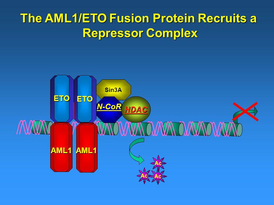 Sin3A The AML1/ETO Fusion Protein Recruits a Repressor Complex HDAC Ac AML1AML1 ETO ETO N-CoR