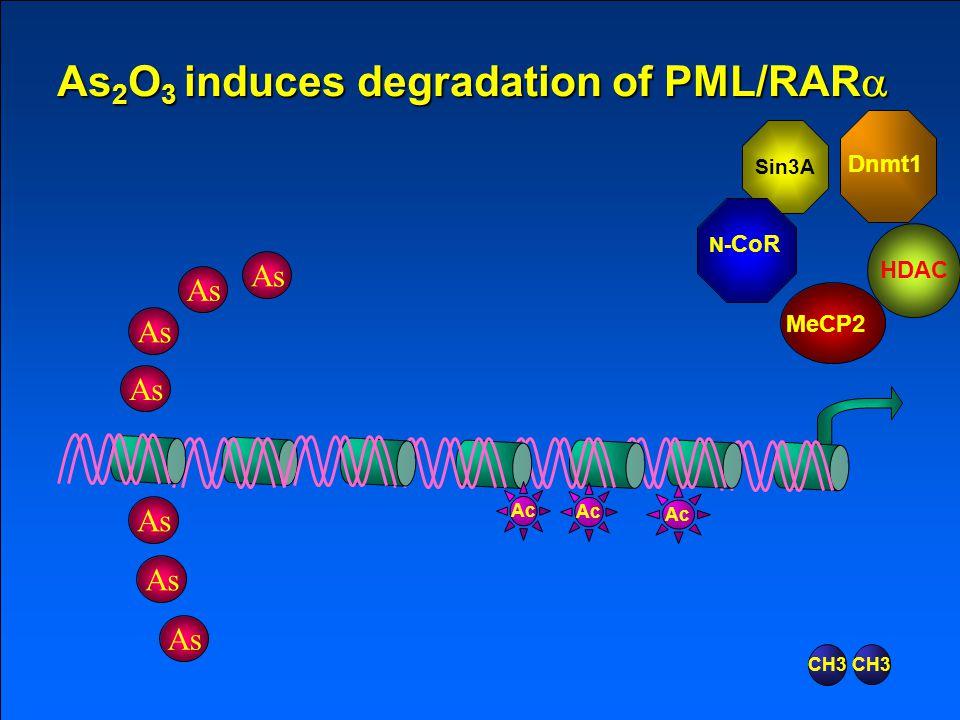 Sin3A N- CoR Dnmt1 MeCP2 HDAC Ac RAR  RARE RAR  PML RARE As 2 O 3 induces degradation of PML/RAR  CH3 As Sin3A N- CoR Dnmt1 MeCP2 HDAC Ac CH3 As As 2 O 3 induces degradation of PML/RAR 