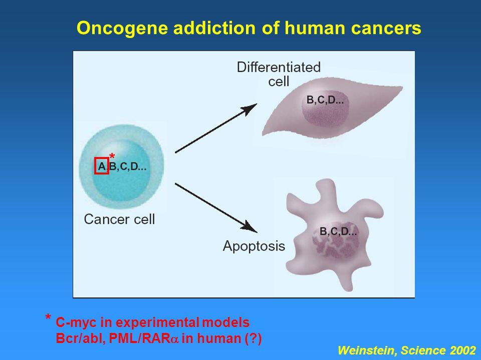 Oncogene addiction of human cancers Weinstein, Science 2002 * * C-myc in experimental models Bcr/abl, PML/RAR  in human (?)