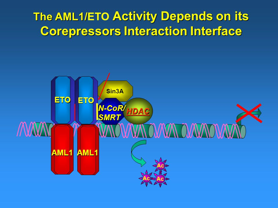 Sin3A The AML1/ Activity Depends on its Corepressors Interaction Interface The AML1/ETO Activity Depends on its Corepressors Interaction Interface HDAC Ac AML1AML1 ETO ETO N-CoR/SMRT