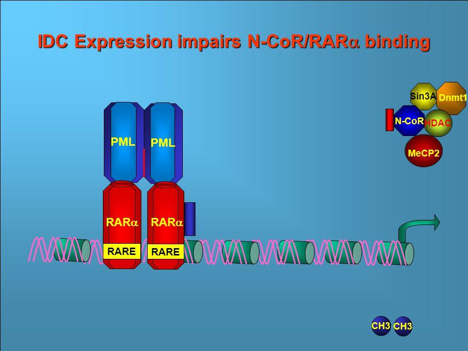 Sin3A N- CoR CH3 Dnmt1 MeCP2 RAR  RARE RAR  PML RARE Transcriptional Repression by PML/RAR  HDAC Ac RAR  RARE RAR  PML RARE CH3 IDC Expression impairs N-CoR/RAR  binding CH3 PML RAR  RARE RAR  RARE Sin3A HDAC Dnmt1 N-CoR MeCP2
