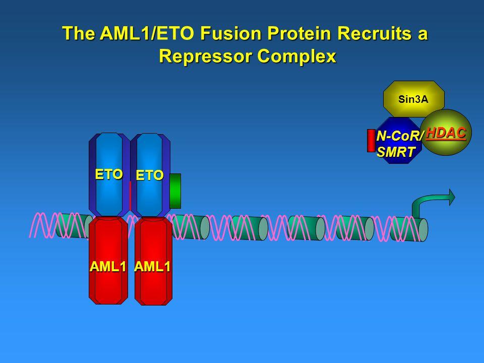 The AML1/ Fusion Protein Recruits a The AML1/ETO Fusion Protein Recruits a Repressor Complex AML1AML1 ETO ETO Sin3A HDAC N-CoR/SMRT
