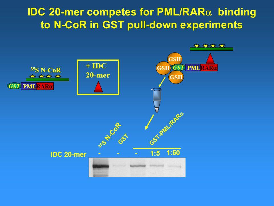 GSH GST PML RAR  35 S N-CoR GSH GST PML RAR  IDC 20-mer competes for PML/RAR  binding to N-CoR in GST pull-down experiments 35 S N-CoR GST GST-PML/RAR  - 1:5 1:50 IDC 20-mer -- + IDC 20-mer