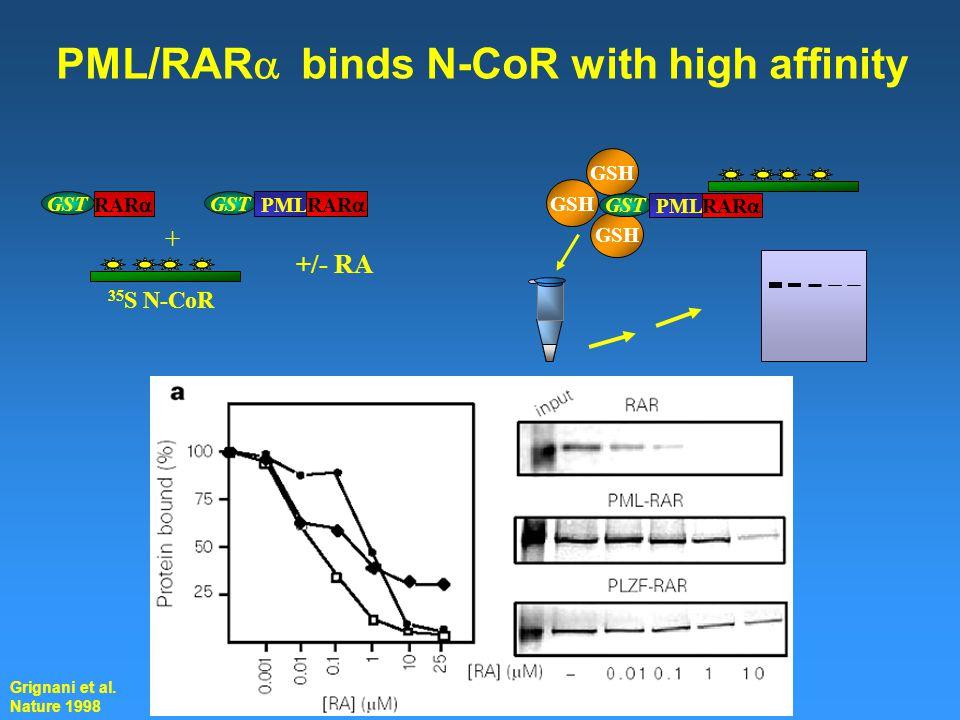 RAR  GST GSH GST PML RAR  + 35 S N-CoR +/- RA GSH GST PML RAR  PML/RAR  binds N-CoR with high affinity Grignani et al.