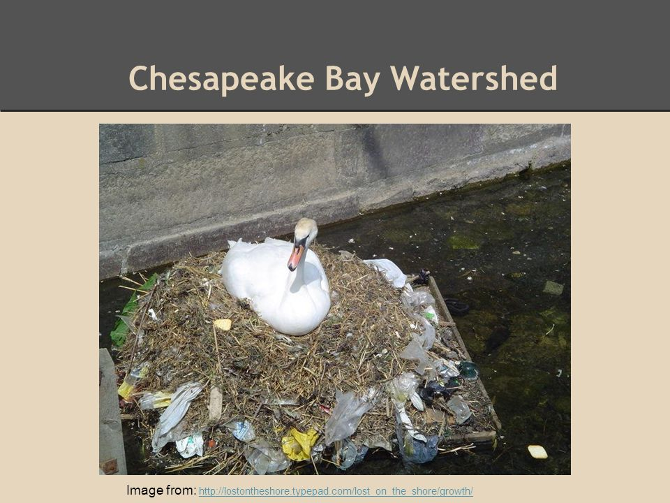 Chesapeake Bay Watershed Image from: http://lostontheshore.typepad.com/lost_on_the_shore/growth/ http://lostontheshore.typepad.com/lost_on_the_shore/growth/