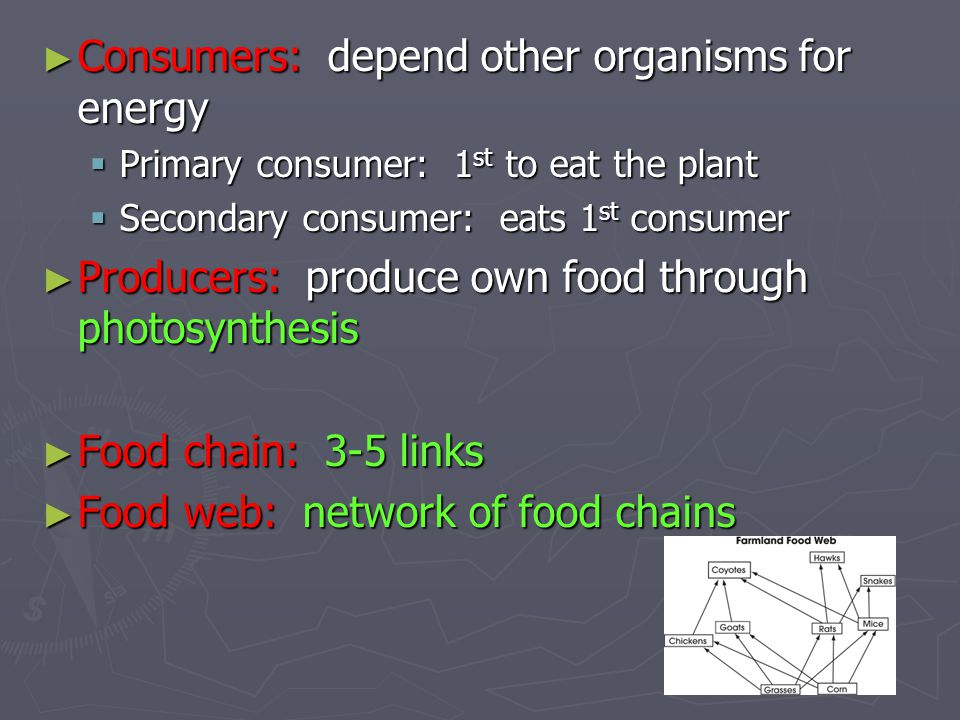► Consumers: depend other organisms for energy  Primary consumer: 1 st to eat the plant  Secondary consumer: eats 1 st consumer ► Producers: produce
