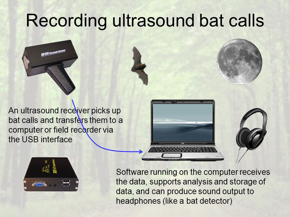 Recording ultrasound bat calls An ultrasound receiver picks up bat calls and transfers them to a computer or field recorder via the USB interface Software running on the computer receives the data, supports analysis and storage of data, and can produce sound output to headphones (like a bat detector)