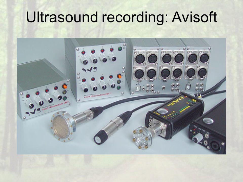 Ultrasound recording: Avisoft