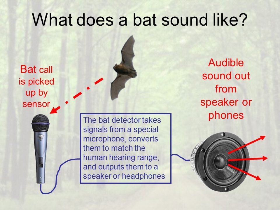 What does a bat sound like.