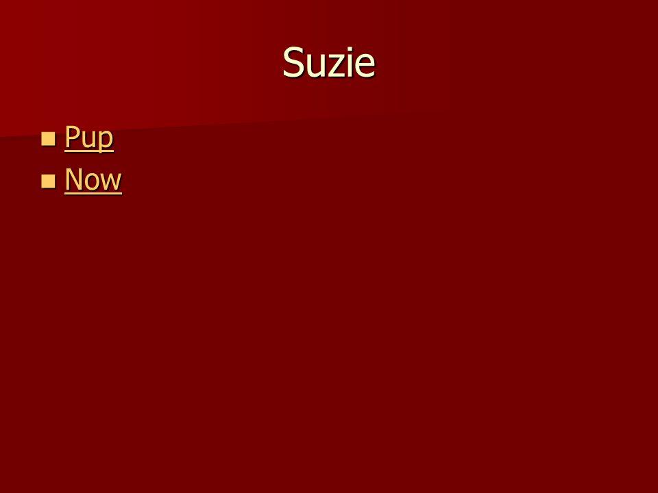 Suzie Pup Pup Pup Now Now Now
