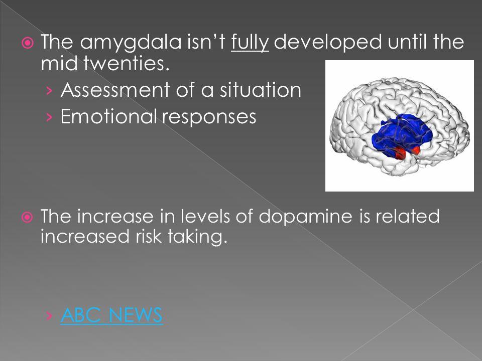  The amygdala isn't fully developed until the mid twenties.