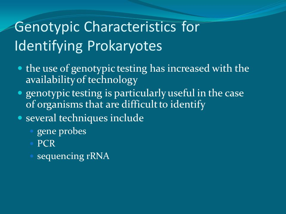 Genotypic Characteristics for Identifying Prokaryotes gene probes single stranded DNA that has been labeled with a identifiable tag, such as a fluorescent dye are complementary to target nucleotide sequences unique in DNA of pathogen Microbe gene probed