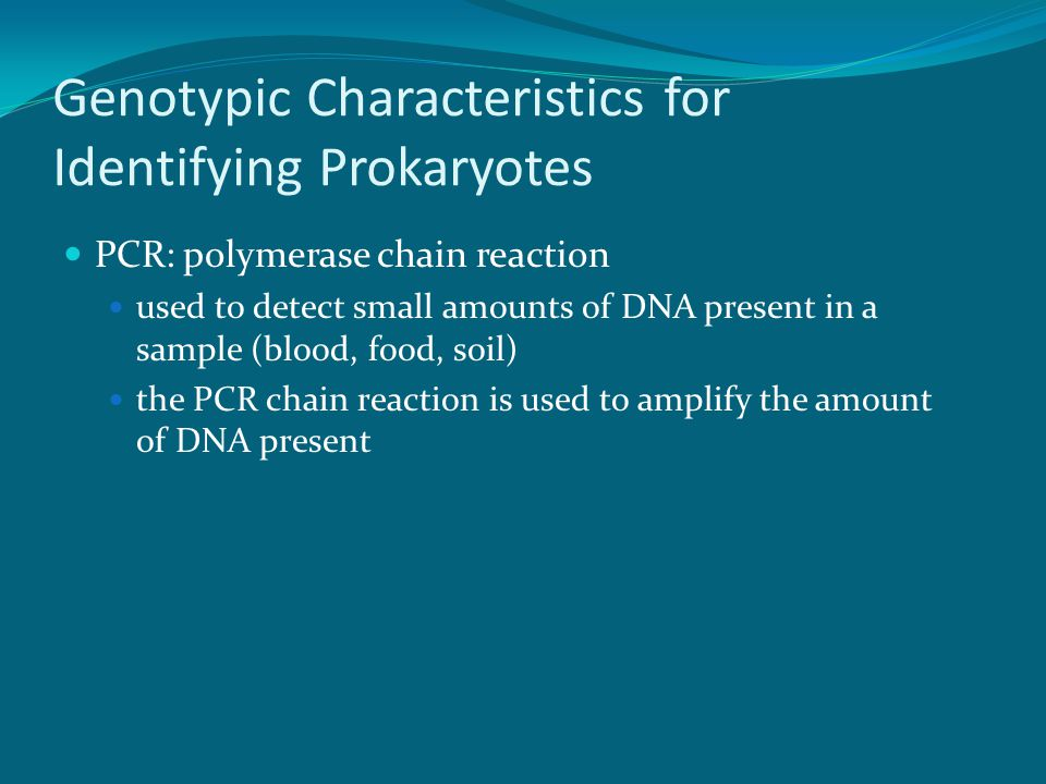 Genotypic Characteristics for Identifying Prokaryotes PCR: polymerase chain reaction used to detect small amounts of DNA present in a sample (blood, food, soil) the PCR chain reaction is used to amplify the amount of DNA present
