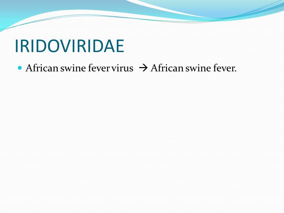 IRIDOVIRIDAE African swine fever virus  African swine fever.