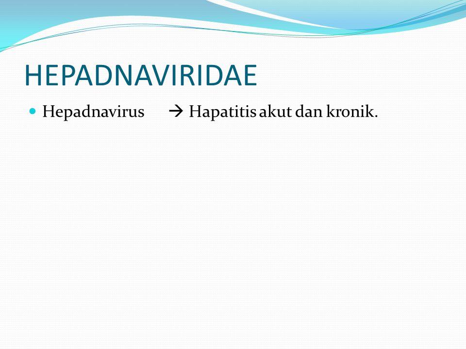 HEPADNAVIRIDAE Hepadnavirus  Hapatitis akut dan kronik.