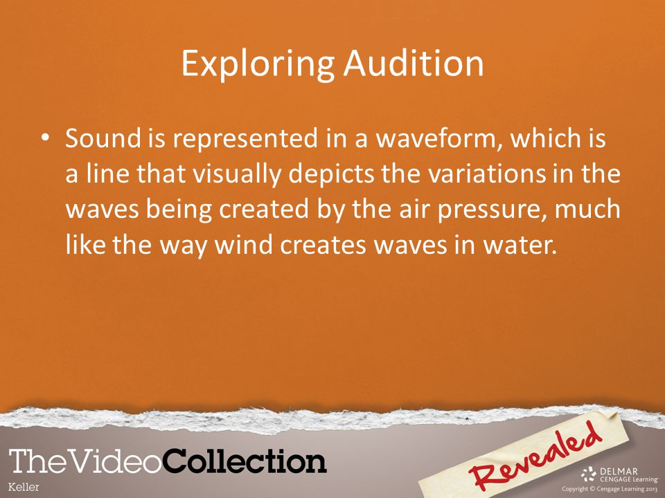 Exploring Audition Sound is represented in a waveform, which is a line that visually depicts the variations in the waves being created by the air pres