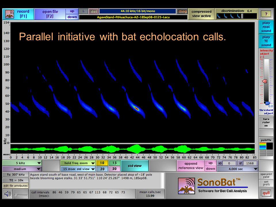 Parallel initiative with bat echolocation calls.