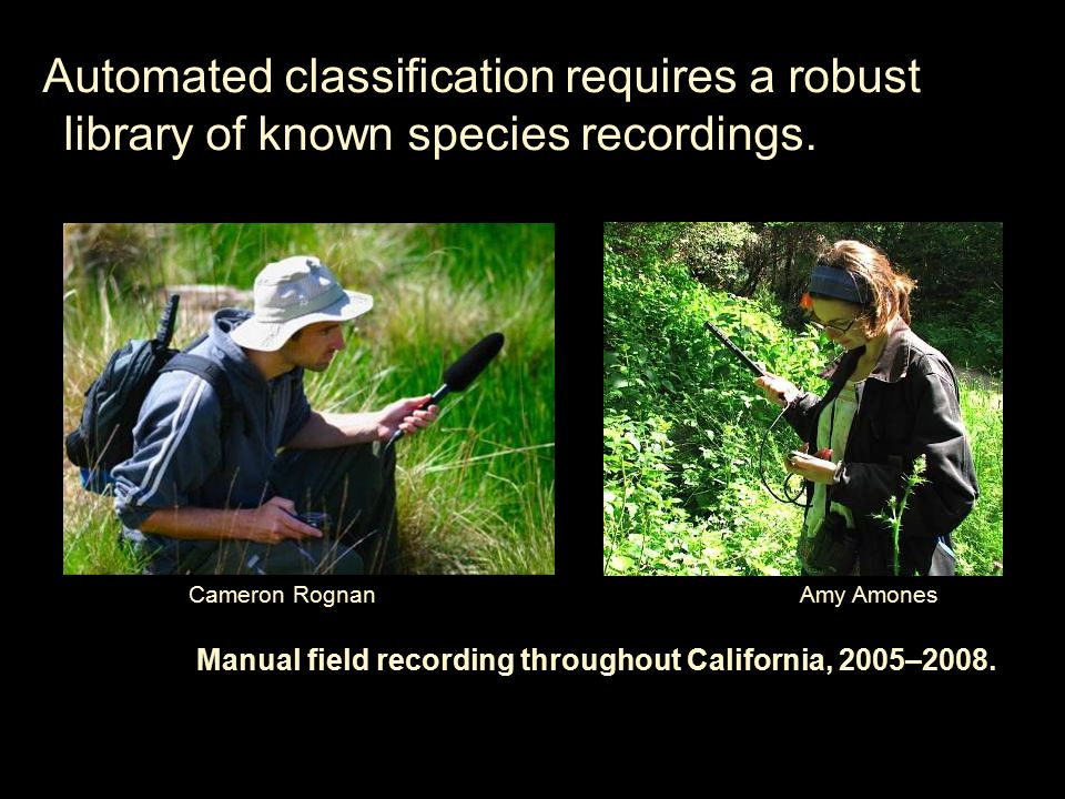 appended reference view Automated processing & identification of bird calls