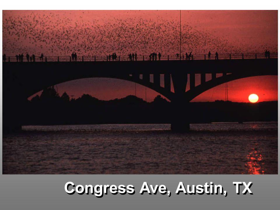 Congress Ave, Austin, TX